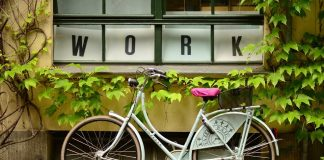 money or career: plants Work Window Bike Leaves Bicycle Pots
