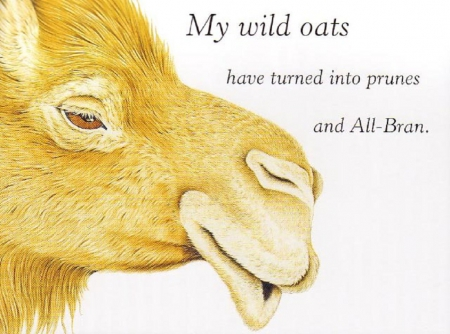 my wild oats - Organic Diet: Three Natural Foods to Include in Your Meals