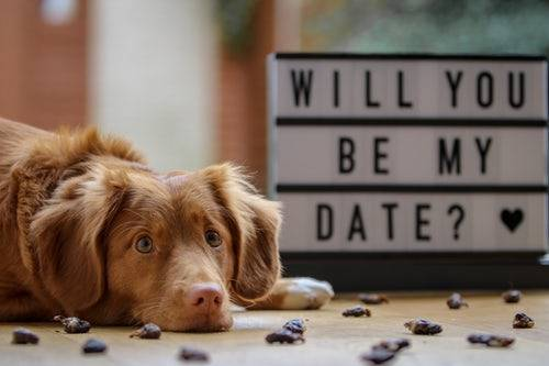 dating vegan photo by Laula the Toller 1519137847 189aca33af2b - Vegan Dating Is Not Much Different from Other Relationships