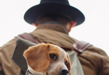 hunting unsplash brown beagle in bag